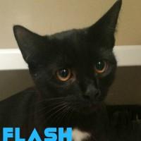 Flash and Mimi